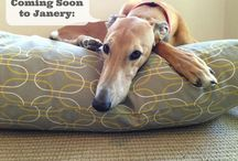 Janery: Pet Beds & Home Accessories / by Janery (Jane Pearson)