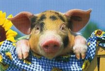 ~ My love affair with Pigs ♥ ~