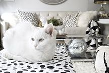 Stylin' Pets / Janery's fabulous pet beds and home accessories, featured in the media.