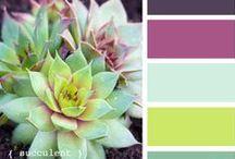 color palette / by Katelyn Shultz