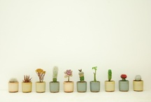 Indoor Plants & Florals / Homes are uplifted by bringing the outside in.  / by Joy Cunningham