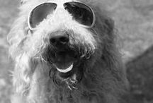 Cool Dog Pictures / Fun dog pictures http://pamperedpuppyboutique.com