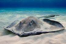 i love stingrays!