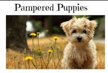 Pampered Puppy Boutique / For the discriminating puppy parent. Discover training tips, accessories and advise for raising your perfect puppy. #pamperedpuppyboutique http://pamperedpuppyboutique.com