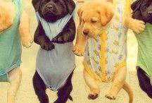 pups.
