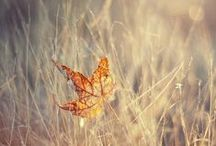 beautiful fall / by Megan Moore