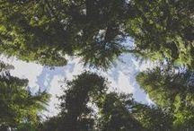 wanderlust / by megan soh / petitely