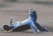 // Sea Turtles // / by Njema DeJong