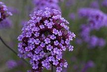 Beauty in Bloom / . / by ~ Terri ~