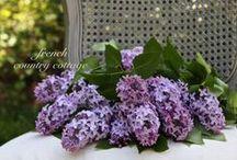 Lilacs / . / by ~ Terri ~