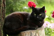 Black Cats / Black cats then and now in  art, illustration and photography.  / by ~ Terri ~