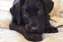 Cute! / by Molly Fraser