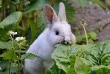 Bunny Hugs / . / by ~ Terri ~
