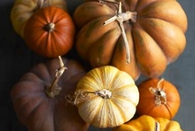 Just Pumpkin / ...it's not just for Fall anymore!