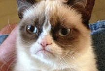 Just Grumpy Cat / DISCLAIMER: The language is bad on some of these, but Grumpy Cat is too cute to pass up!