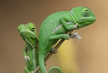 Other forms of life: reptiles / by Dalva Freire