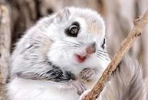 Cute animals / by Dalva Freire