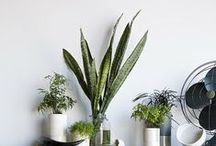 Nature ∆ Indoors / ∆ Don't be lazy, grow things / by Vesper Lynx