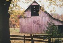 Autumn ~ Heather / Beautiful shades of heather themed / by ~ Terri ~