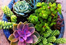 Succulents / by Mary Kropog