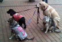 I love doggies