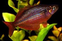 All things Rainbow / Natures Own Beautiful Rainbow Colours #mermaidscales #fishscales #rainbowfish #scienceandnature