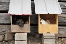 Farmgirl Fare Chickens / by Farmgirl Fare