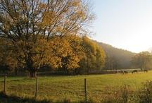 Farmgirl Fare Autumn Color / by Farmgirl Fare