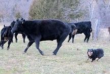 Farmgirl Fare - Lucky Buddy Bear / by Farmgirl Fare