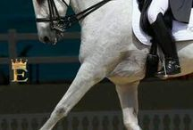 Exquisite Horses / by cherie lane