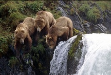 Watchable Wildlife / Where to find the furry, the winged and the marine critters across the state.  / by Alaska Travel
