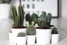 GREEN | PLANTS