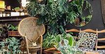 U R B A N | J U N G L E / Incorporating greenery into Interior styling