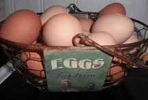 "Eggspression / Show off your eggs from any feathered friend. (Chickens, Turkeys, Pheasant, Peafowl, Geese, Ducks,... )  ""ABSOLUTELY NO SPAM"" or DELETE Happens! ""EGGS ONLY"" (((ECHO))) / by PaulsRarePoultry.com"