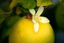Fragrance of The Month March: Malibu Lemon Blossom