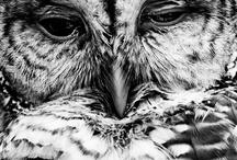 Animals // Dyr