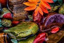 Autumn/Fall/Thanksgiving / Please, save only 5 pins per day, thanks.   Autumn is my favorite season of all - crisp mornings, warm sweaters, hot apple cider or cocoa !!  / by Gladys Brown