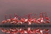 Flamingos! / by Catherine Lee
