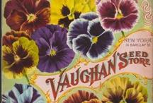 Vintage Seedy Stuff