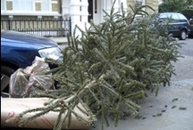 After Christmas - London / The streets of South Kensington in London are full of discarded Christmas trees, waiting to be collected each year, straight after Christmas.