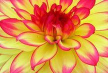 Flowers Up Close / by Susan DeLucca