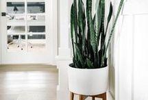 House Plant Care & Love