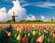 Spring / Spring is in bloom! It's time to get out in the garden and get planting. It's also a great excuse to get travelling and admire other people's displays around the world. Tulips in Amsterdam anyone?