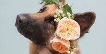 Dogs at weddings / Man's best friend and flowers - what more could you want? A board full of inspiration on how to combine the beauty of flowers and our favourite pets