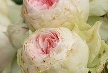 le rose che vorrei / la lista delle #rose che prima o poi arriveranno nel mio #giardino http://giardinoindiretta.blogspot.it/