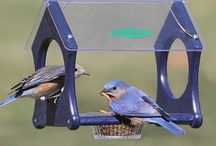 Birds and other critters / http://www.examiner.com/gardening-in-columbia/eastern-bluebirds-prefer-insects-and-suet-for-nourishment#examinercom / by Linda Belcher