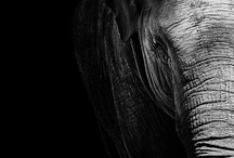 Black & White / by MARILIZE DE