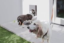 Home Decor: Dog Lovers / Our collection of the best dog beds, dog showers, dog houses, washing stations, and dog-inspired art and interiors.