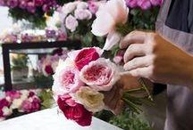 j'aime les fleurs / All things flowers / by Kelsey Barnes