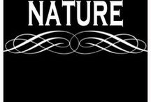 NATURE SCENES / Beautiful photography of nature, scenery, animals in nature. Kind of a free for all for anything outdoors I find intriguing.